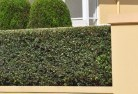 Acacia Hills Privacy screens 30
